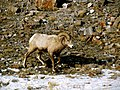 Grand Teton National Park (8478719845).jpg