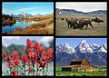 Grand Teton National Park collage.jpg