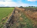 Grass Road near West Morton - geograph.org.uk - 47574.jpg
