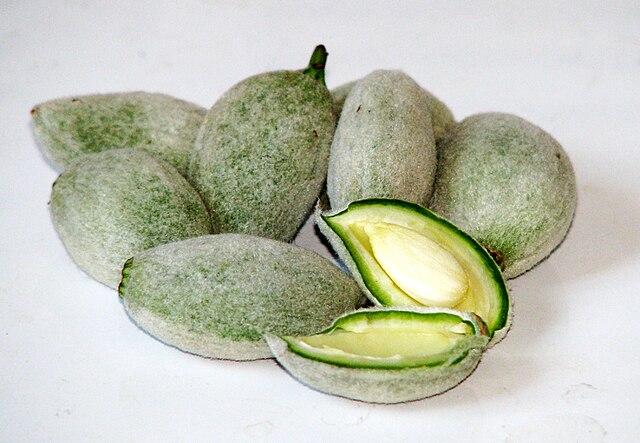 Green Almonds.