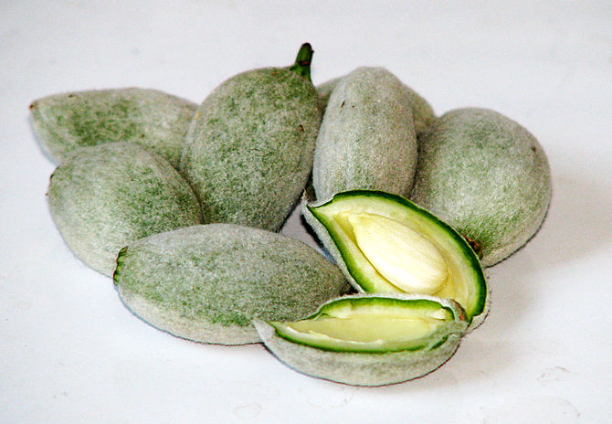 English: Green Almonds.
