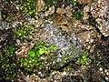 Green ice bubbles! (6021334176).jpg