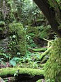 Greenery in puzzlewood - July 2011 - panoramio.jpg