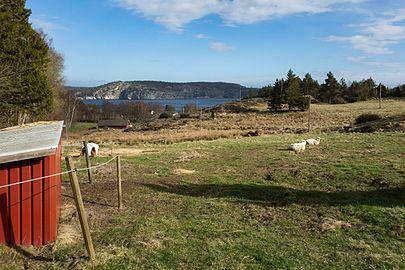 Gullmarn fjord seen from Gullmarsskogen.jpg