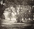 Gustave LeGray - Tree, Forest of Fontainebleau - Google Art Project.jpg