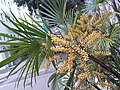 HK 上環 Sheung Wan 卜公花園 Blake Garden plants green 掌狀葉 palm leaves February 2020 SS2 02.jpg