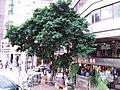 HK 灣仔 Wan Chai 軒尼詩道 Hennessy Road October 2018 SSG trees n clothing shop.jpg