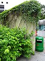 HK CWB Tin Hau morning Sept-2015 Hing Fat Street Victoria Park green plants.JPG