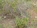Hadassah Trail P1150402.JPG