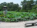 Hakusan Park3.JPG