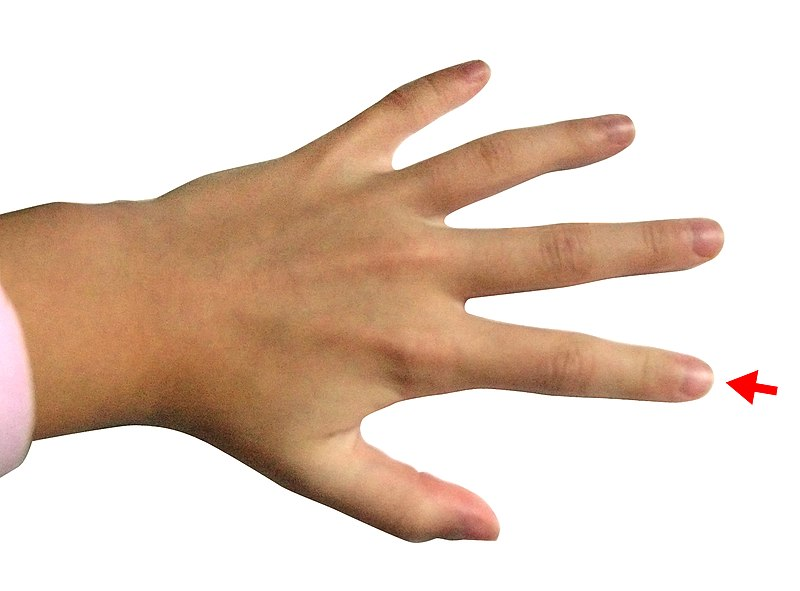 File:Hand - Index finger.jpg