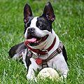 Happy Dog (14591980751).jpg