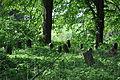 Havlíčkův-Brod-tyfový-hřbitov2013d.jpg