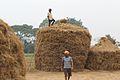 Hay Stacks In Achuli Village.jpg