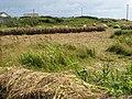 Hay drying - geograph.org.uk - 1449586.jpg