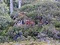 Heathers, mosses and lichens, Glen Strathfarrar. - geograph.org.uk - 1531607.jpg
