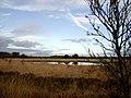 Heide bij Steenwijk (77560738).jpg