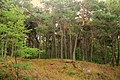 Hel, Poland - panoramio.jpg