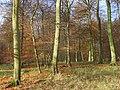 Henleyhill Wood - geograph.org.uk - 1055748.jpg