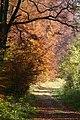 Herbst im Blautal - panoramio.jpg