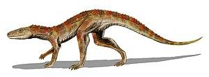 Crocodylomorpha - Hesperosuchus an early crocodylomorph