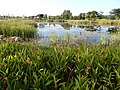 Hilton garden - panoramio (4).jpg