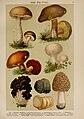 Hoffmann-Dennert botanischer Bilderatlas (Taf. 03) (6424980853).jpg
