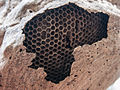 Honeycomb in Isla Margarita 2.jpg