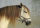 Horse December 2014-1.jpg