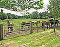 Horses at Redwings Horse Sanctuary - geograph.org.uk - 1385256.jpg