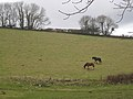 Horses on a hillside near Perry Farm - geograph.org.uk - 1724804.jpg