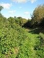 Hound Nature Trail - geograph.org.uk - 1464074.jpg