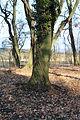 Hrobka Daubků - anglický park u kaple 06.JPG
