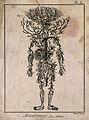 Human arterial system. Engraving by Benard, 1779, after engr Wellcome V0007855EL.jpg