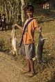 Hunting hare Lepus nigricollis MG 5312 03.jpg