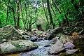 Hutan dekat Air terjun Eria Singkawang.jpg