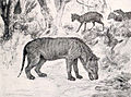Hyaenodon and Leptomeryx.jpg