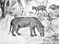 Hyaenodon and Leptomeryx.jpg