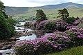 IERLAND SCHOTLAND 2004 209 (5977835416).jpg