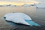 Iceberg con pingüinos.jpg