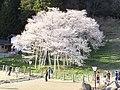 Ichinomiyamachi, Takayama, Gifu Prefecture 509-3505, Japan - panoramio (8).jpg