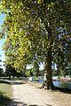 Ile de Bercy @ Lac Dausmenil @ Bois de Vincennes @ Paris (29527984594).jpg