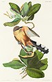 Illustration from Birds of America (1827) by John James Audubon, digitally enhanced by rawpixel-com 169.jpg