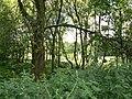 In Torr Wood - geograph.org.uk - 202408.jpg