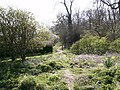 Into the Woods - geograph.org.uk - 392790.jpg