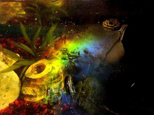 Iridescent biofilm on a fishtank