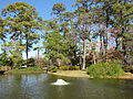 Japanese Garden, Hermann Park, Houston in Jan. 2012.JPG