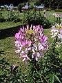 Jawaharlal Nehru Memorial Botanical Gardens, Srinagar 07.JPG