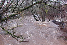 A turbulent, muddy stream in flood has spread through the woods and into the yard of a nearby house.