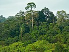 Jungle seen from the Observation Tower (7844007800).jpg